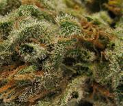 thumb-weed