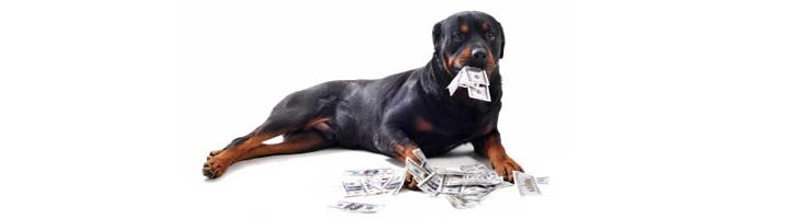 10 mitos sobre estudiar medicina veterinaria » listeilor